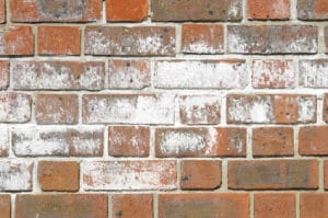 Image of a brick wall with chalky white efflorescence effect